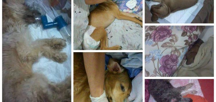 Você tem cachorro em casa? Cuidado com o surto de cinomose em Guarapari
