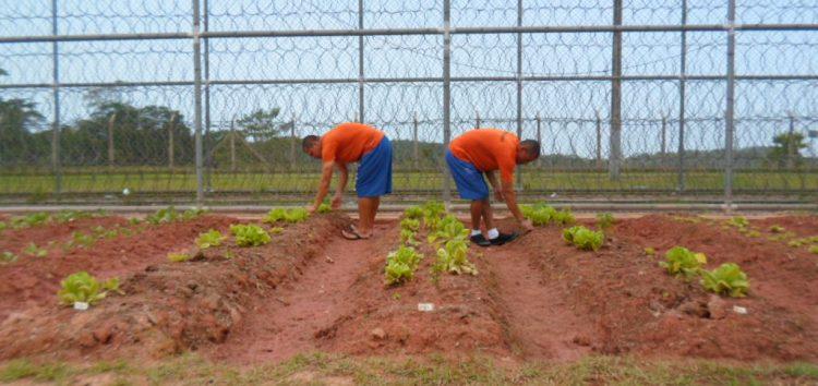 68967408b6d62 Internos de Guarapari cultivam horta e doam alimentos a familiares