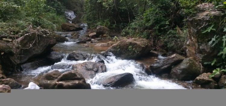 Faculdade promove ação de recuperação das matas em Guarapari
