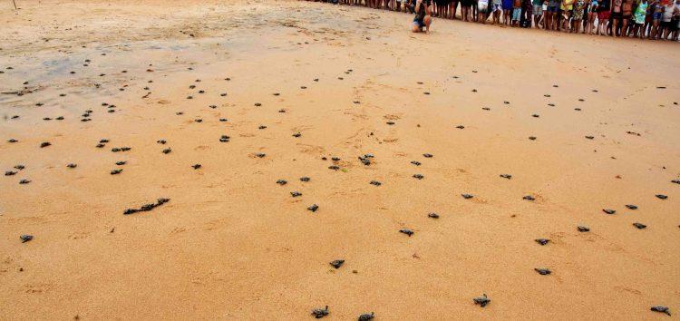100 filhotes de tartaruga marinha são soltos na Praia da Guanabara