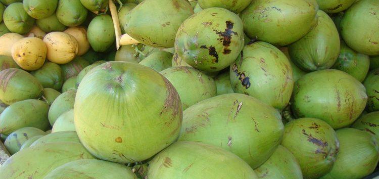 Frutas do verão: o coco verde