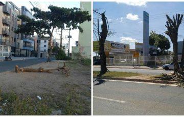 Corte de árvores ainda é um problema na cidade