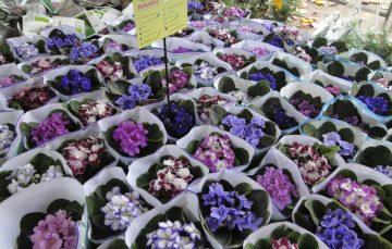 Guarapari recebe feira com 200 espécies de flores e plantas