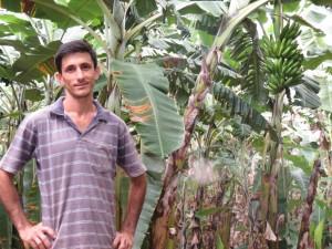 produtor de banana