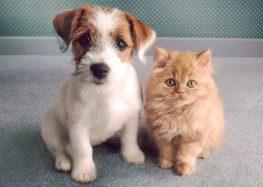Vem aí mais uma edição da feira de adoção de cães e gatos em Guarapari