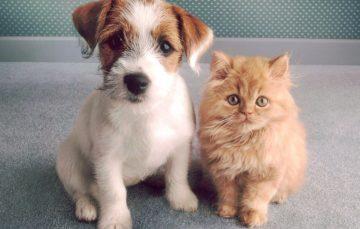 Guarapari terá feira de adoção de animais neste sábado
