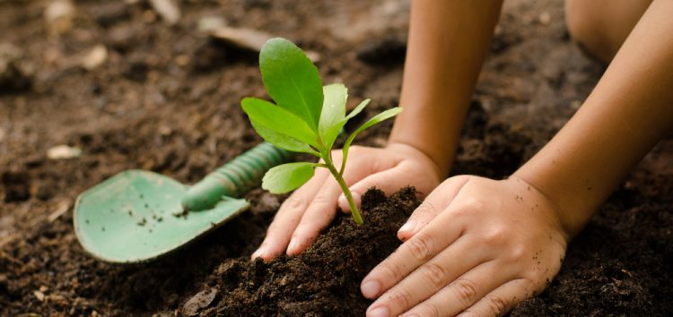 ONG Bicho do Mato vai distribuir mudas de plantas em faculdade de Guarapari