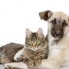 Campanha de vacinação antirrábica: saiba onde imunizar seu pet