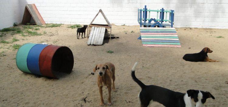 70 animais castrados em dois meses de funcionamento do novo CCZ