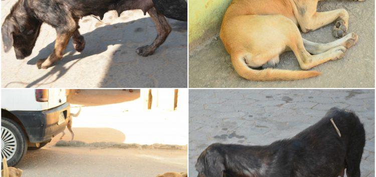 Moradores reclamam de animais doentes nas ruas de Jabaraí