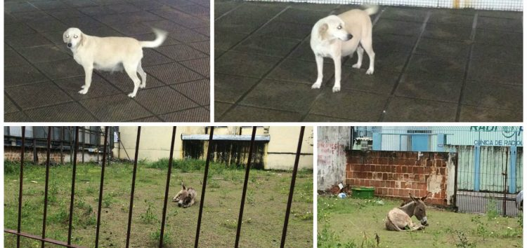 Animais abandonados preocupam moradores do Centro