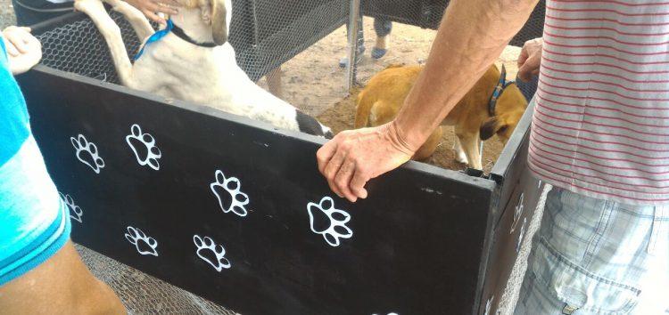 Animais ganham lar através da Feira de Adoção do CCZ