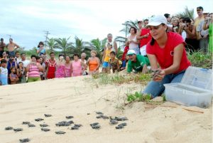 Os visitantes também podem acompanhar a soltura de filhotes de tartaruga, que acontece principalmente nos meses de janeiro e fevereiro.