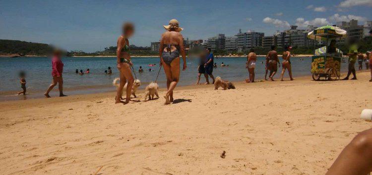 Flagra: Animais passeiam nas praias de Guarapari, mas legislação não permite