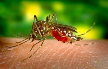 Guarapari volta a vacinar contra Febre Amarela