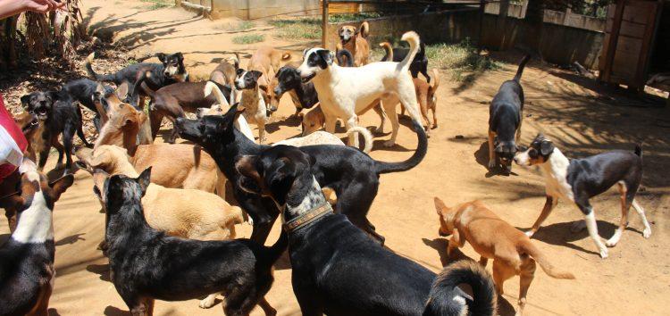 Ong's resgatam animais abandonados e dão nova vida para eles