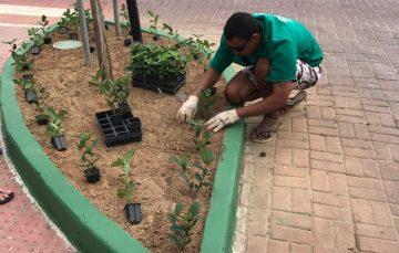 Iriri desenvolve projeto para revitalizar jardins do balneário