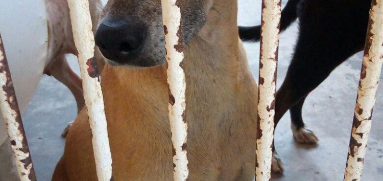 Situação de animais magros intriga moradora de Guarapari