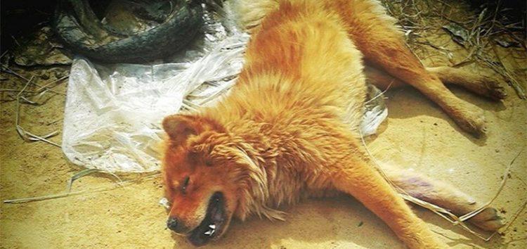Cachorra é deixada para morrer em terreno baldio