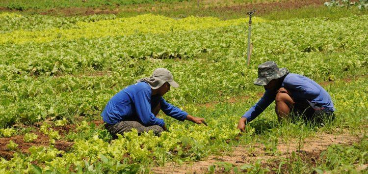 Prefeitura de Anchieta organiza cursos e seminários referentes a produção agrícola e pecuária