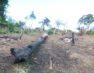 Ação entre PM e Prefeitura prende oito e arranca três mil metros de cerca em área de preservação