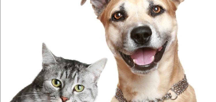 Prefeitura de Anchieta abre edital para entidades de proteção a animais