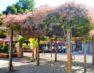 Trabalhos de paisagismo e jardinagem embelezam praça em Alfredo Chaves