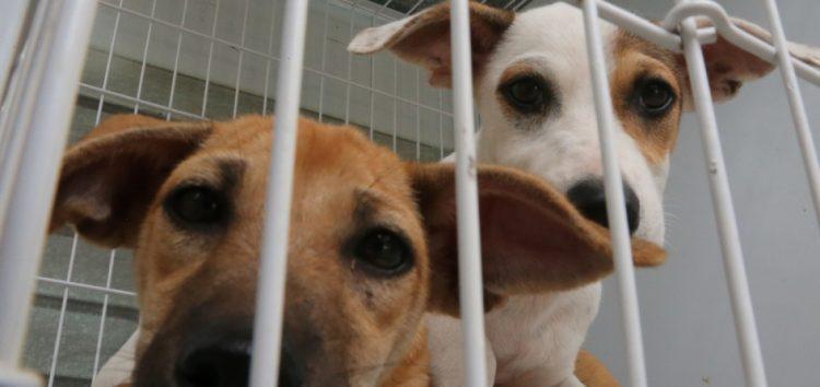 Feira de cães e gatos busca diminuir número de animais nas ruas de Guarapari