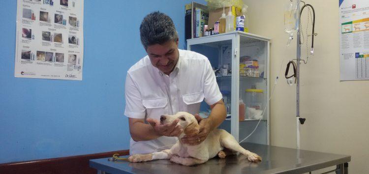 Animal de estimação: Você está preparado para ter um?