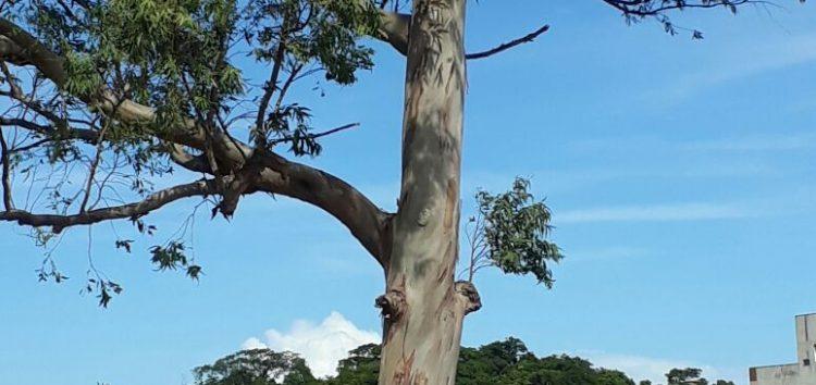 Árvores em Guarapari!