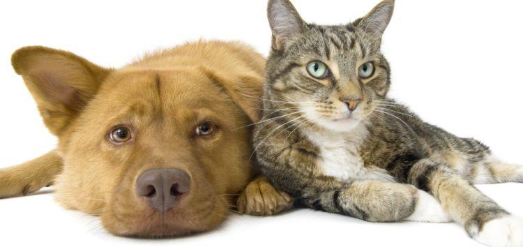 Castração de cães e gatos em mais três bairros de Guarapari