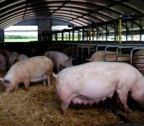 Município de Guarapari regulamenta abate de animais em pequena escala