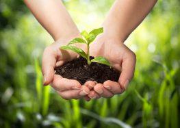 Alfredo Chaves inicia hoje (05) as comemorações pelo Dia do Meio Ambiente