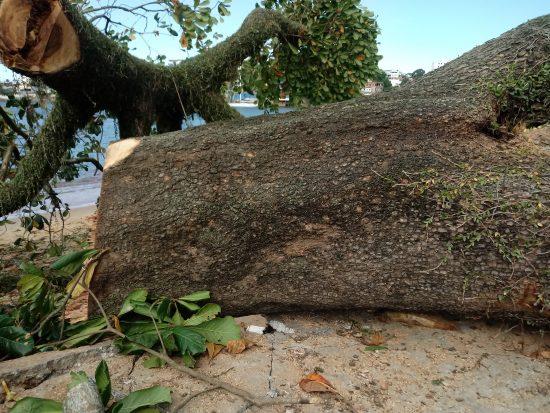 Multa de R$ 100 mil para cada árvore cortada em Guarapari, determinou a justiça
