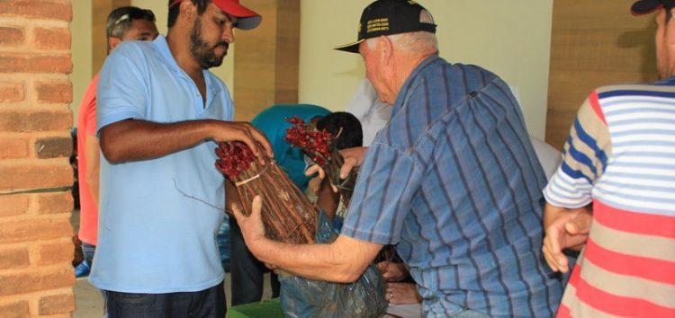 Mais de 12 mil mudas de uva entregues a produtores em Guarapari