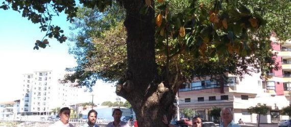 Após decisão da justiça, vereadores de Guarapari comemoram