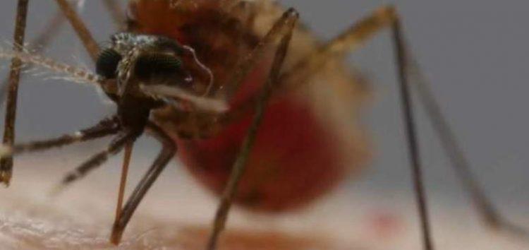 Sobe para 106 o número de casos confirmados de malária no ES