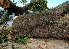 Juiz revoga decisão e Prefeitura de Guarapari pode cortar árvores na Praia da Muquiçaba