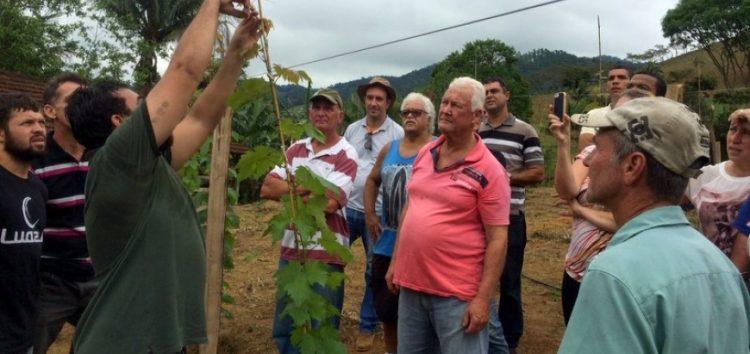 Produtores de Guarapari recebem treinamento sobre cultivo de uva