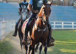 Alfredo Chaves se prepara para competição de marcha entre cavalos
