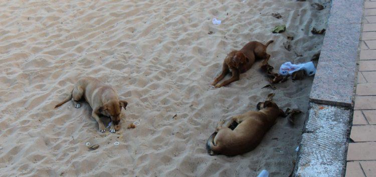 Morador reclama dos cães soltos na Praia das Castanheiras em Guarapari