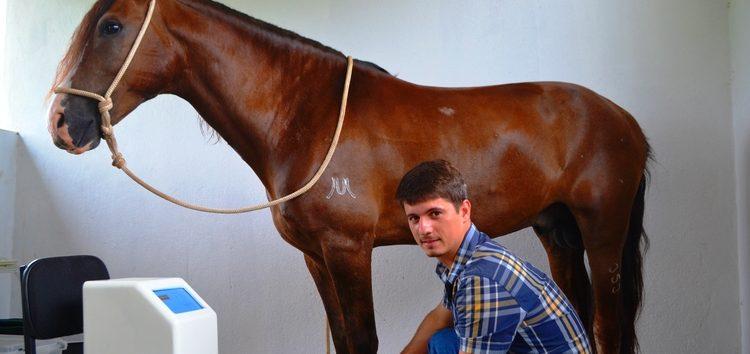 Tratamento de atletas para os cavalos da 1ª Copa de Marcha de Alfredo Chaves