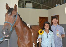 Veterinários tratam pele de cavalo com óleo de girassol em Alfredo Chaves