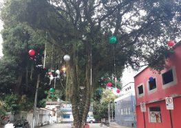Praça de Alimentação do 14º Natal Som e Luz é uma atração à parte em Alfredo Chaves