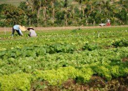 Guarapari e Alfredo Chaves são beneficiados com a sanção da Lei que regulamenta produção agroecológica e orgânica no Estado
