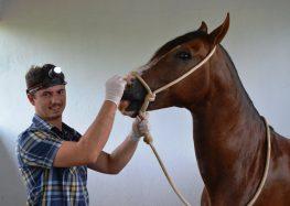 Cavalos Mangalarga recebem tratamento antes de Feira Tríplice