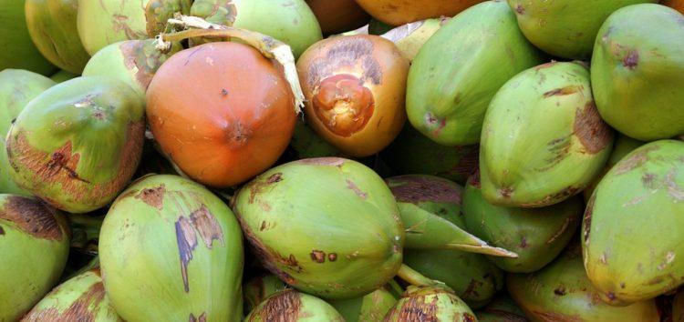 O coco verde é bom mas a casca é um problema que pede atenção