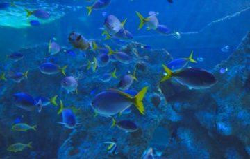 A maior variedade de peixes do litoral brasileiro é Guarapari