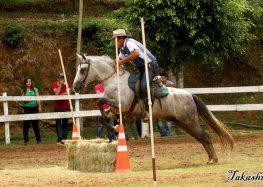 11ª Exposição do Cavalo Mangalarga em Domingos Martins começa amanhã (03)