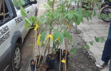 Guarapari intensifica plantio de mudas em projeto de arborização
